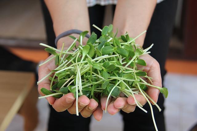 Pěstování klíčků vám půjde skvěle!